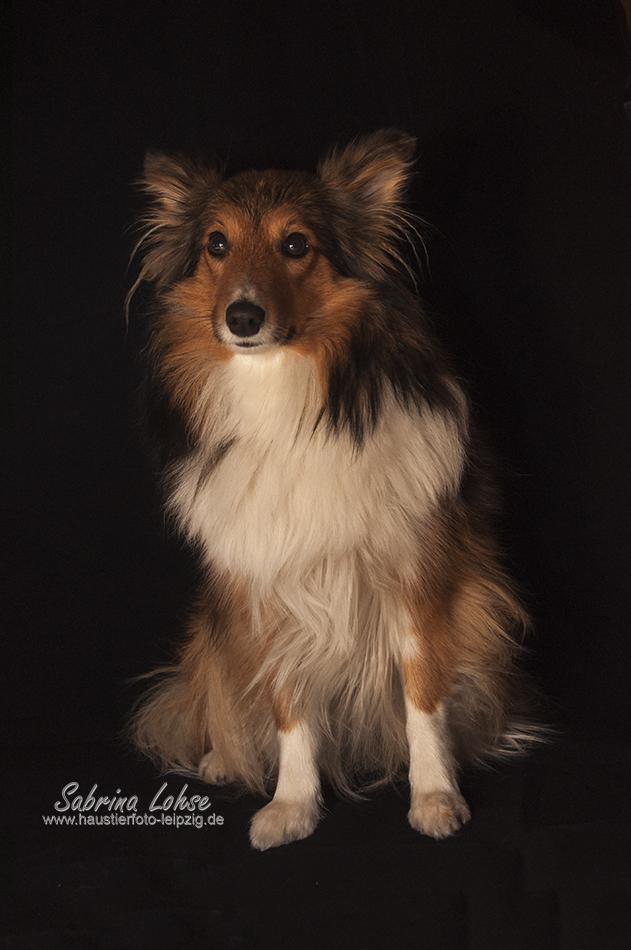 Sabrina Lohse Tierfotografie Portfolio Hunde Ayleen