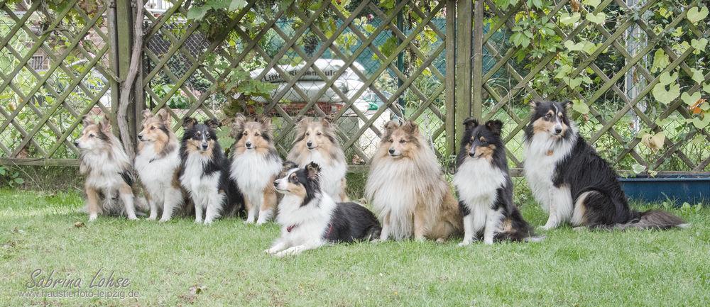 Sabrina Lohse Tierfotografie Portfolio Hunde   Zuchtstättengruppe