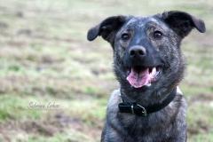 Sabrina Lohse Tierfotografie Portfolio Hunde Mischlingshündin Abby