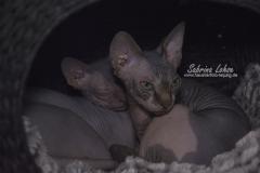 Sabrina Lohse Tierfotografie Portfolio Katzen