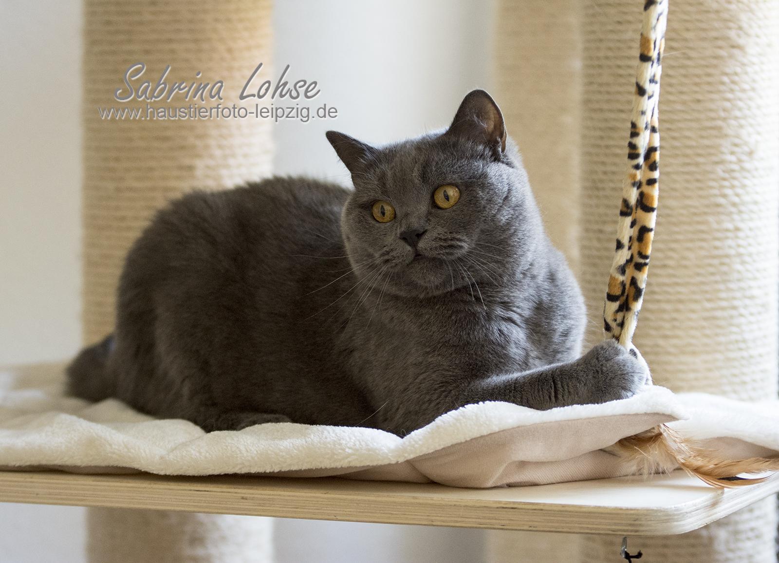 Sabrina Lohse Tierfotografie Portfolio Katze